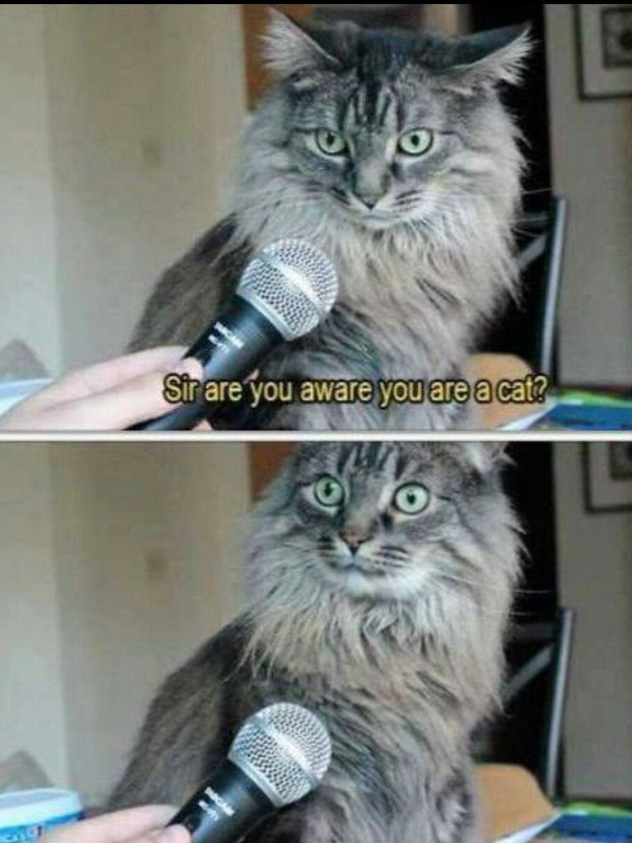cat interview meme