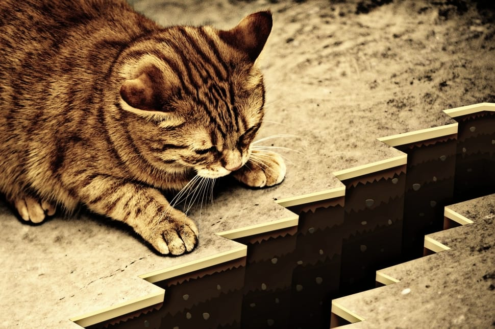 abyss-risk-cute-caution-sepia-cat-wallpaper-preview